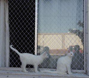 rede de proteção para animais em curitiba
