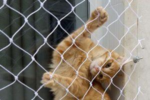 redes de proteção para animais em curitiba